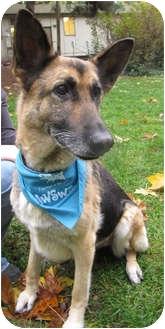 German Shepherd Dog Dog for adoption in Mill Creek, Washington - Betsy