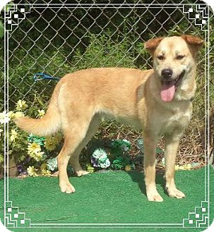 Retriever (Unknown Type) Mix Dog for adoption in Marietta, Georgia - GABRIELLA (R)