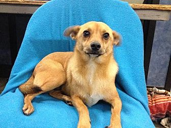 Terrier (Unknown Type, Medium) Mix Dog for adoption in Fresno, California - Tank