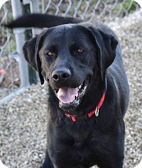 Labrador Retriever Mix Dog for adoption in Meridian, Idaho - Dixie