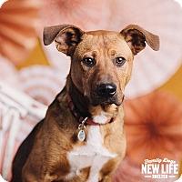 Adopt A Pet :: Bernard - Portland, OR