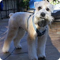 Adopt A Pet :: Chewy - Encino, CA