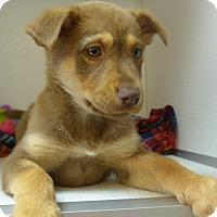 Adopt A Pet :: Lise - Manning, SC