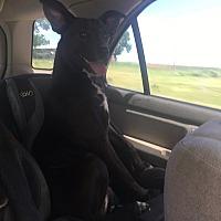 Adopt A Pet :: Bonnie - Jacksonville, TX