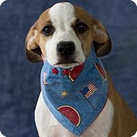 Adopt A Pet :: Pinta - Calgary, AB