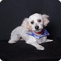 Adopt A Pet :: Oodle - Van Nuys, CA