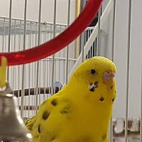 Adopt A Pet :: T.J. and Zeus - Grandview, MO