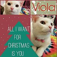 Domestic Shorthair Cat for adoption in Grand Blanc, Michigan - Viola