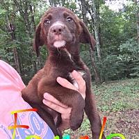 Adopt A Pet :: Beauty (NY-Sarah) - Sherburne, NY