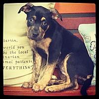 Adopt A Pet :: Sadi - Grand Bay, AL