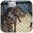 Photo 1 - Labrador Retriever/Mastiff Mix Dog for adoption in Bristol, Rhode Island - Summer