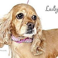 Adopt A Pet :: Lady - Rancho Mirage, CA