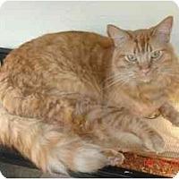 Adopt A Pet :: Monkey - Mesa, AZ
