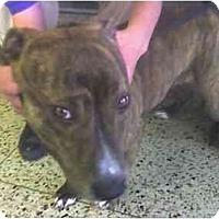 Adopt A Pet :: DUTCHESS - Fowler, CA