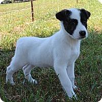 Adopt A Pet :: Nicky - Foster, RI