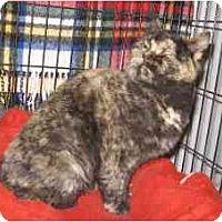 Adopt A Pet :: Crisbelle - Colmar, PA