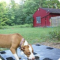 Adopt A Pet :: Dory - Grafton, OH