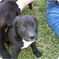 Adopt A Pet :: Diego - Salem, NH