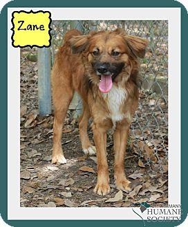 Shepherd (Unknown Type) Mix Dog for adoption in Covington, Louisiana - Zane