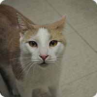 Adopt A Pet :: Riley - Rockaway, NJ