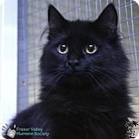 Adopt A Pet :: Zorro - Mission, BC