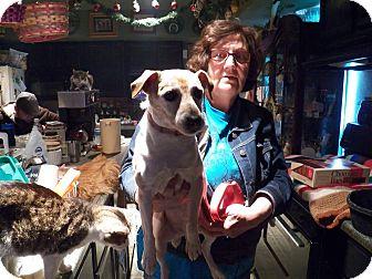 Terrier (Unknown Type, Small) Mix Dog for adoption in Benton, Pennsylvania - Peanut