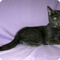 Adopt A Pet :: Ashton - Powell, OH