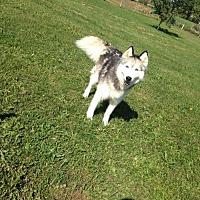 Adopt A Pet :: Mia - Centerburg, OH