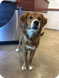 Border Collie Mix Dog for adoption in San Francisco, California - Dexter