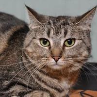 Adopt A Pet :: Lizzie - Elk Grove Village, IL