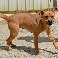 Adopt A Pet :: Willow - Southbury, CT
