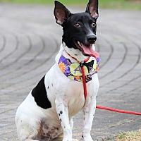 Adopt A Pet :: Al - San Mateo, CA