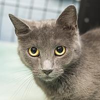 Adopt A Pet :: Dot - Whitehall, PA