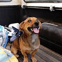 Adopt A Pet :: Andy - Sylva, NC