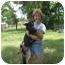 Photo 3 - German Shepherd Dog Dog for adoption in Green Cove Springs, Florida - Foxy
