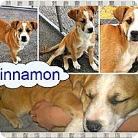 Adopt A Pet :: Cinnamon - Ranger, TX