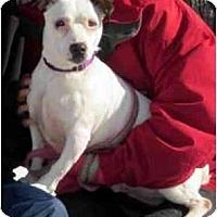 Adopt A Pet :: Jack 4(Julio) - Rhinebeck, NY