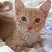 Adopt A Pet :: Nolan - Reston, VA