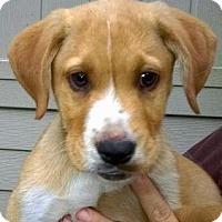 Adopt A Pet :: Amy#2M - Orlando, FL