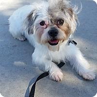 Adopt A Pet :: Oscar - Santa Ana, CA