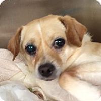 Adopt A Pet :: Dublin - Jupiter, FL