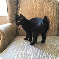Adopt A Pet :: Raven - Simpsonville, SC