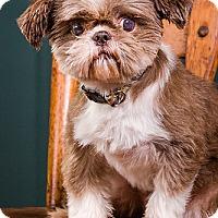 Adopt A Pet :: Jacob - Owensboro, KY