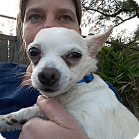 Adopt A Pet :: Teddy - Marrero, LA