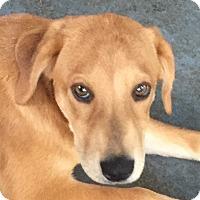 Adopt A Pet :: Harper - Harrisonburg, VA