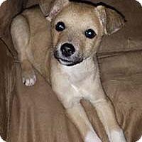 Adopt A Pet :: Reese/Spider - Chantilly, VA