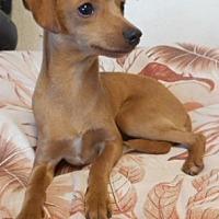 Adopt A Pet :: Rudy - Yucaipa, CA