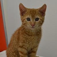 Adopt A Pet :: ApriCAT - Knoxville, IA