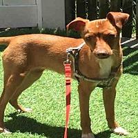 Adopt A Pet :: HOPE - Alameda, CA