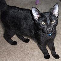 Adopt A Pet :: Lincoln - Colmar, PA